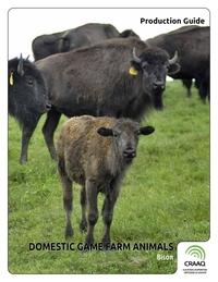 Domestic Game Farm Animals - Bison
