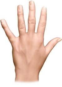dos de la main