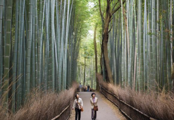 Agriculture urbaine et paysages ruraux: contrastes et leçons du Japon