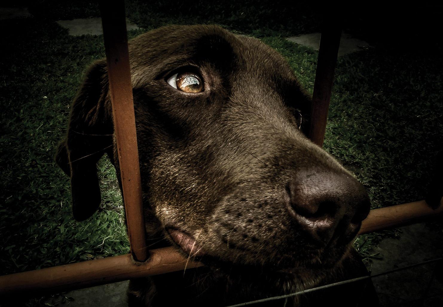 Un procureur pour les animaux